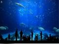 floya aqua park